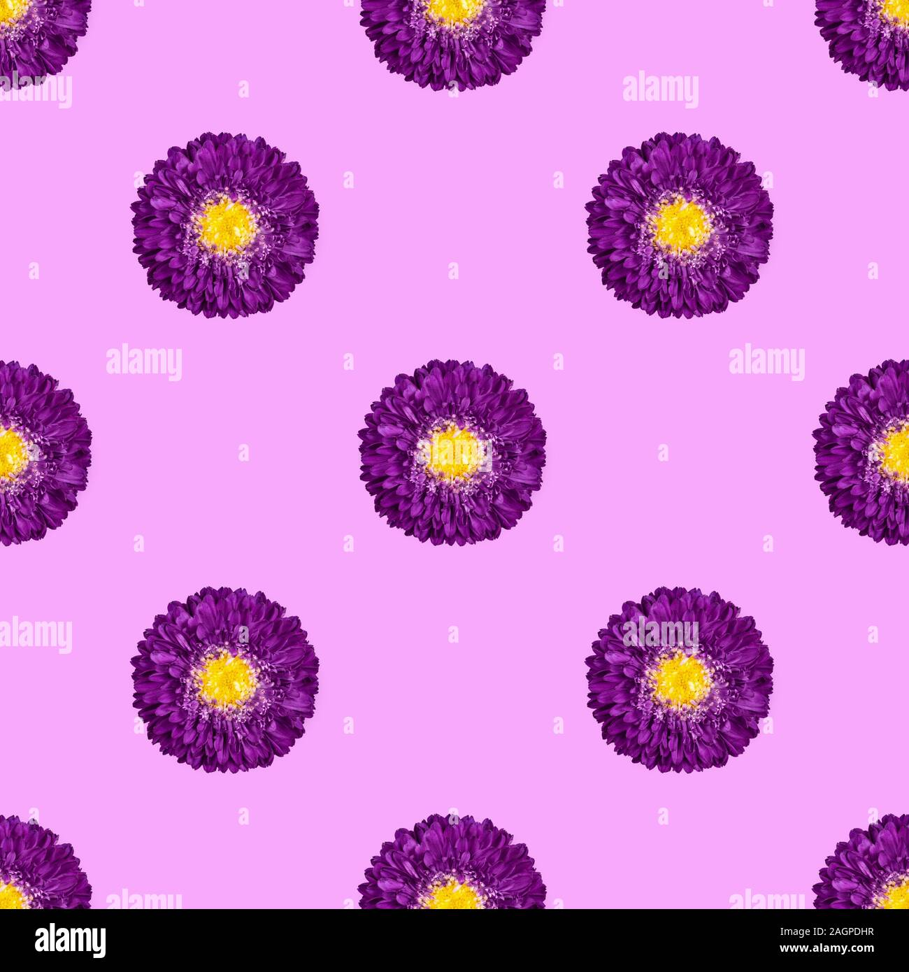 Seamless pattern with purple Aster flowers on pink background. Floral pattern. Tropical abstract background. Stock Photo