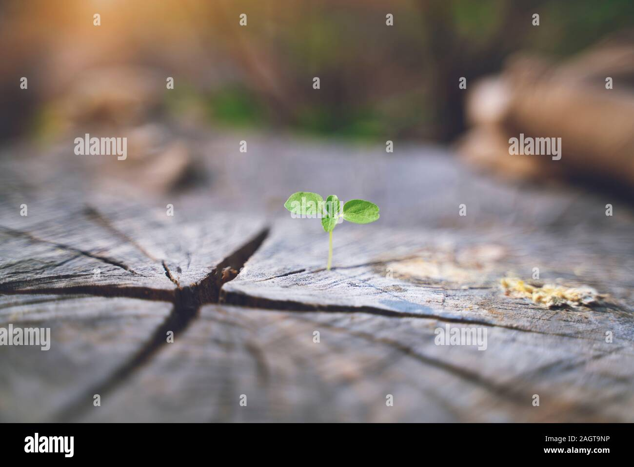 fresh green young plant of new seed born and grow up on a dark brown dead log tree in jungle showing contrast of colors lighting meaning and feeling o Stock Photo