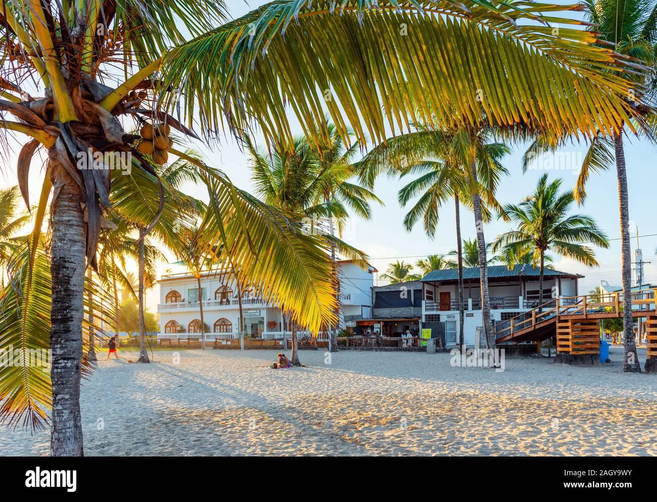 Galapagos Island Isla Isabela July 2 2019 Coconut Tree