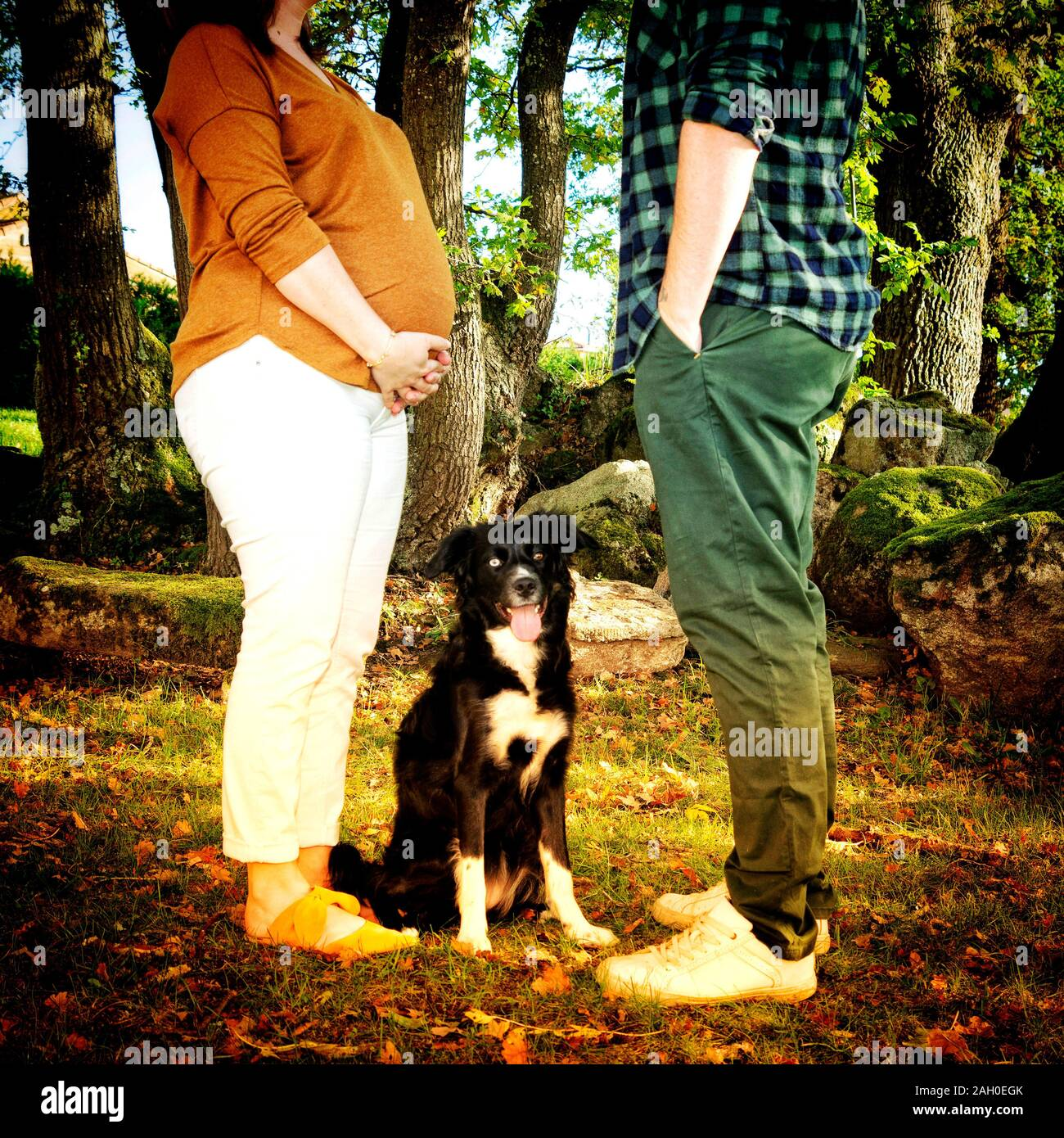 Dog sitting between the legs of a pregnant young woman and her husband Stock Photo