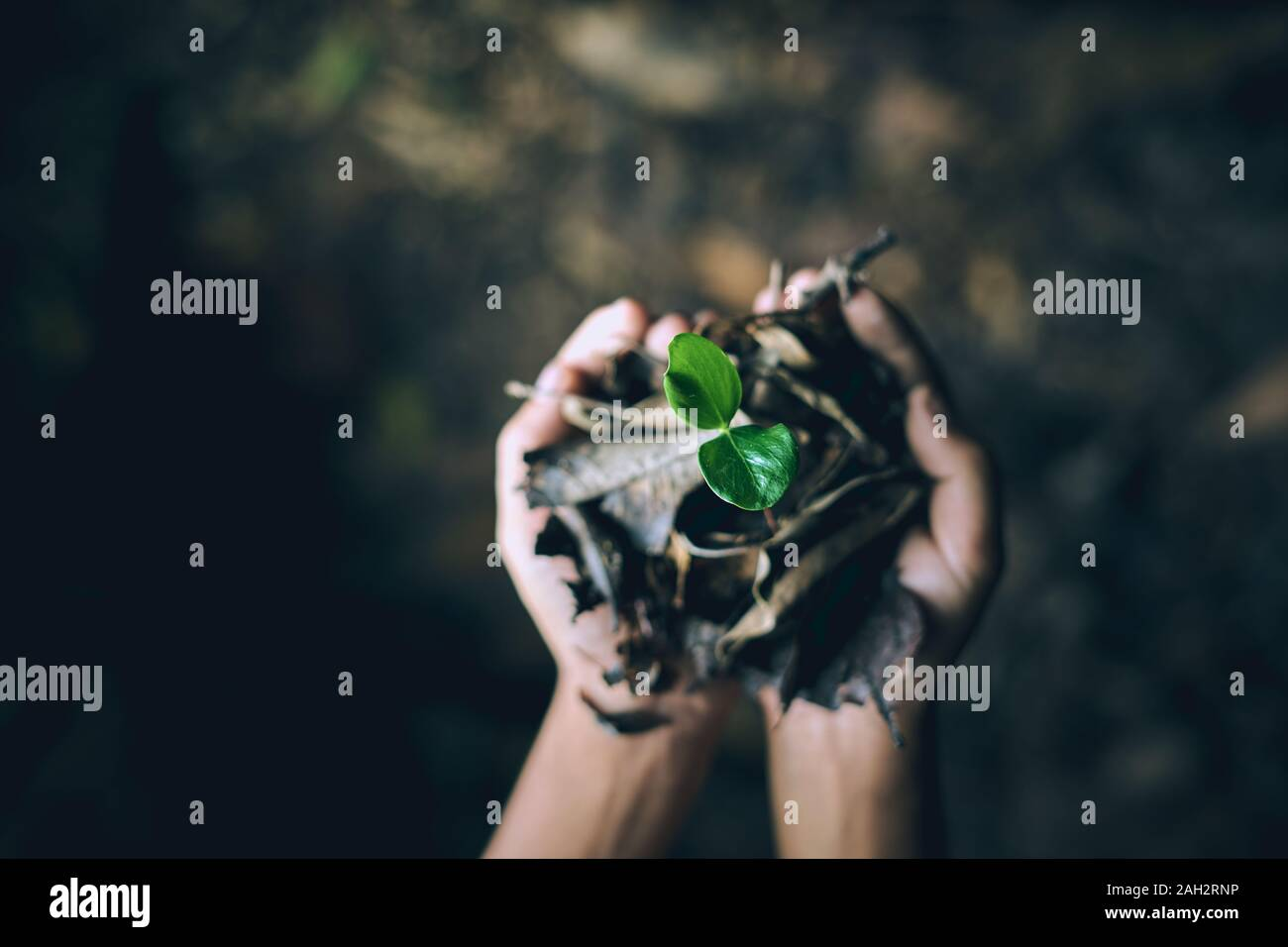 Boy hands holding young trees for planting to reduce global warming, Forest conservation Stock Photo