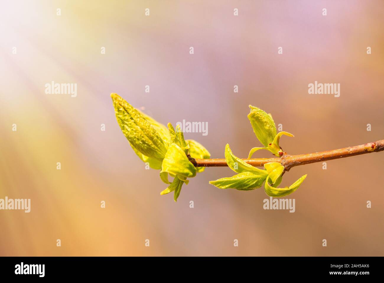 Spring bud. Composition of nature. Spring Awakening Concept Stock Photo