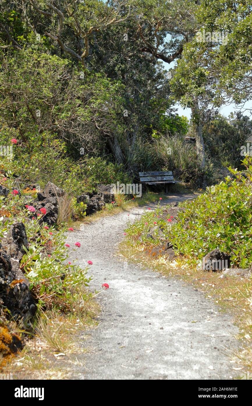 Day trip, hiking and trail paths lead through the scenic Rangitoto Island Wildlife Sanctuary near Auckland, New Zealand Stock Photo