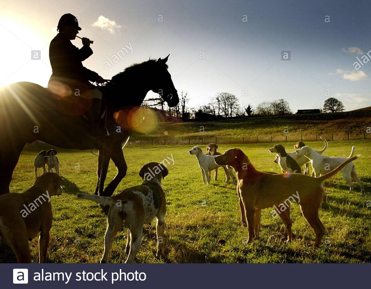 File photo dated 15/12/04 of hounds being called for the start of the Buccleuch hunt as leading animal rights group The League Against Cruel Sport have released findings that nearly 90% of people in Scotland support a ban on fox hunting. Stock Photo