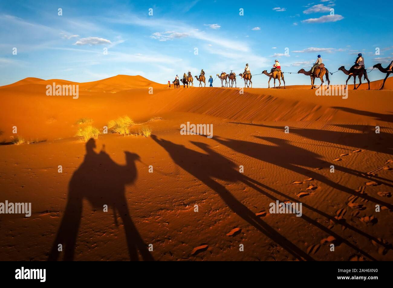Sahara desert camels trekking tours with berbers adventure dromadaires riding and berber guiding excursion  in Merzouga Dubai, Oman, Bahrain Morocco o Stock Photo