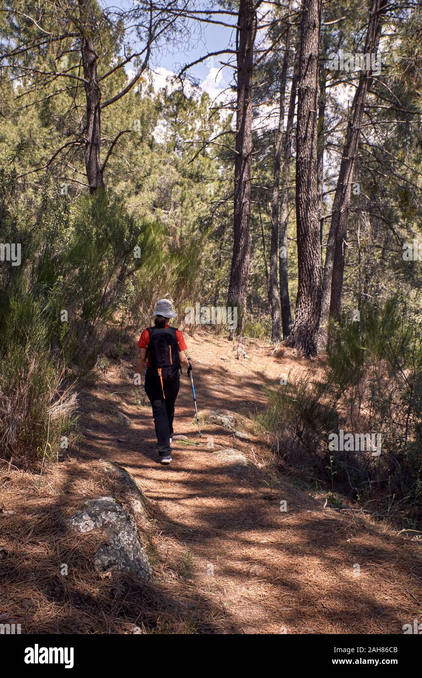 woman doing trekking on the paths of a pine forest on the side of a mountain Stock Photo