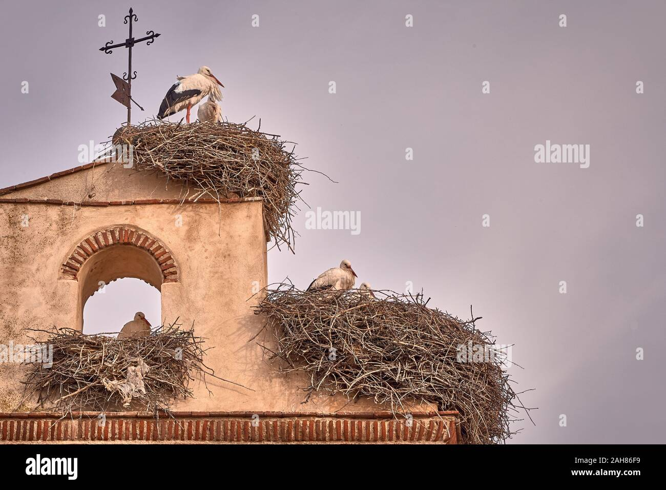 beautiful storks in a spring sunset on the belfry of a church Stock Photo