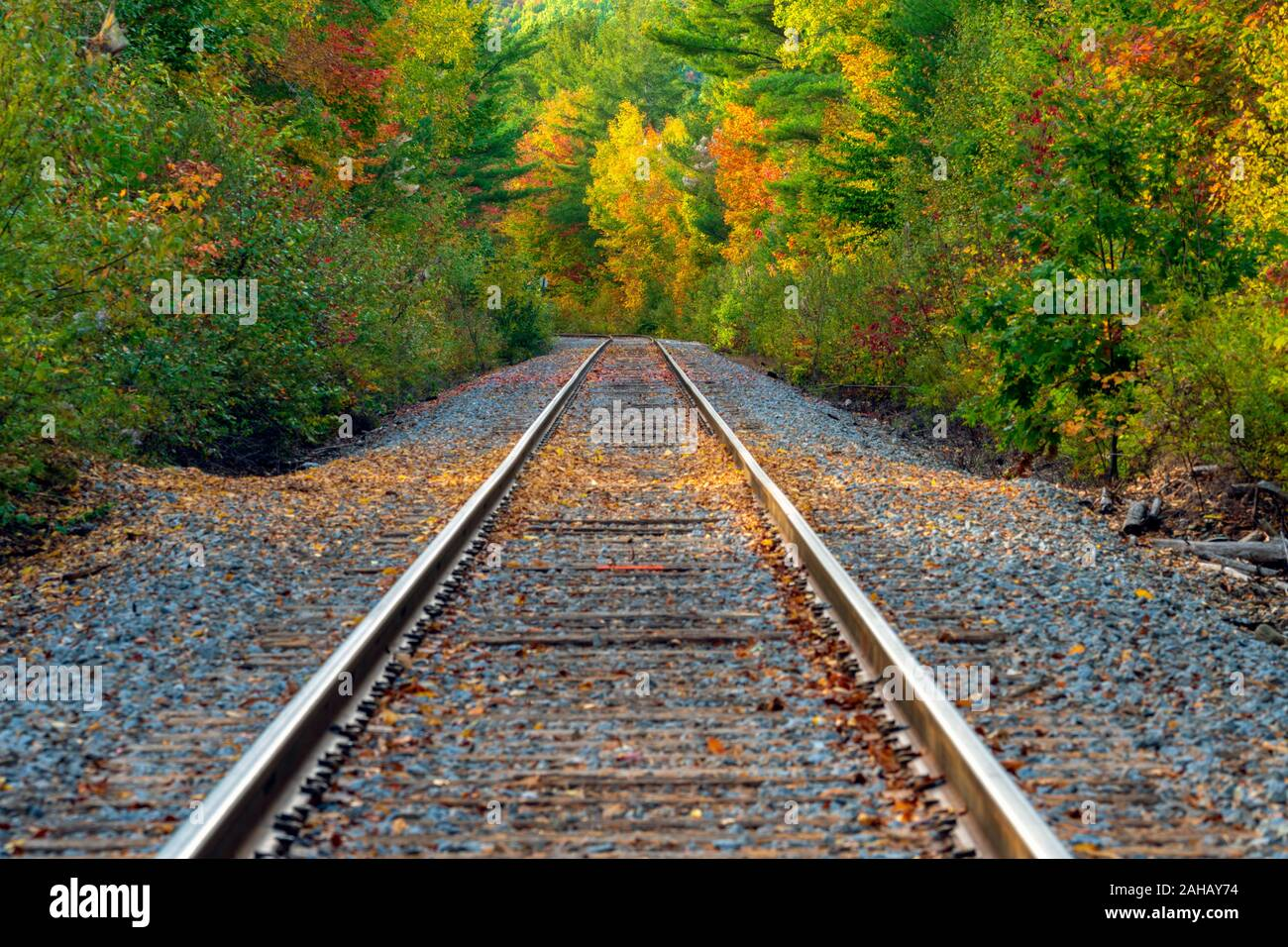 Railway tracks lead into the forest displaying colorful autumn leaves. Stock Photo