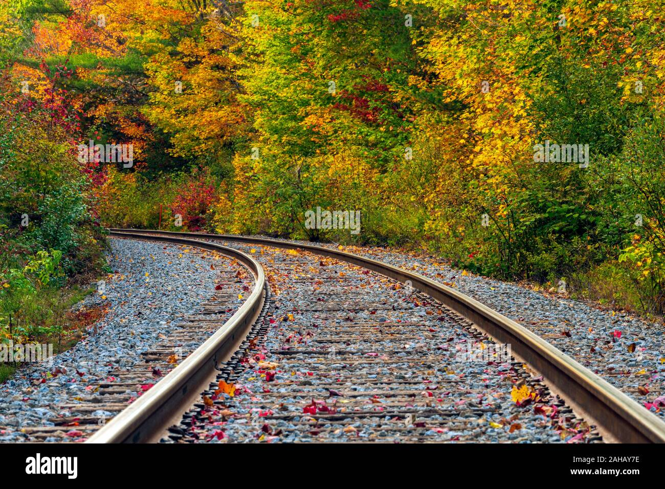 A long bend in the railway tracks leads into the forest displaying colorful autumn leaves. Stock Photo