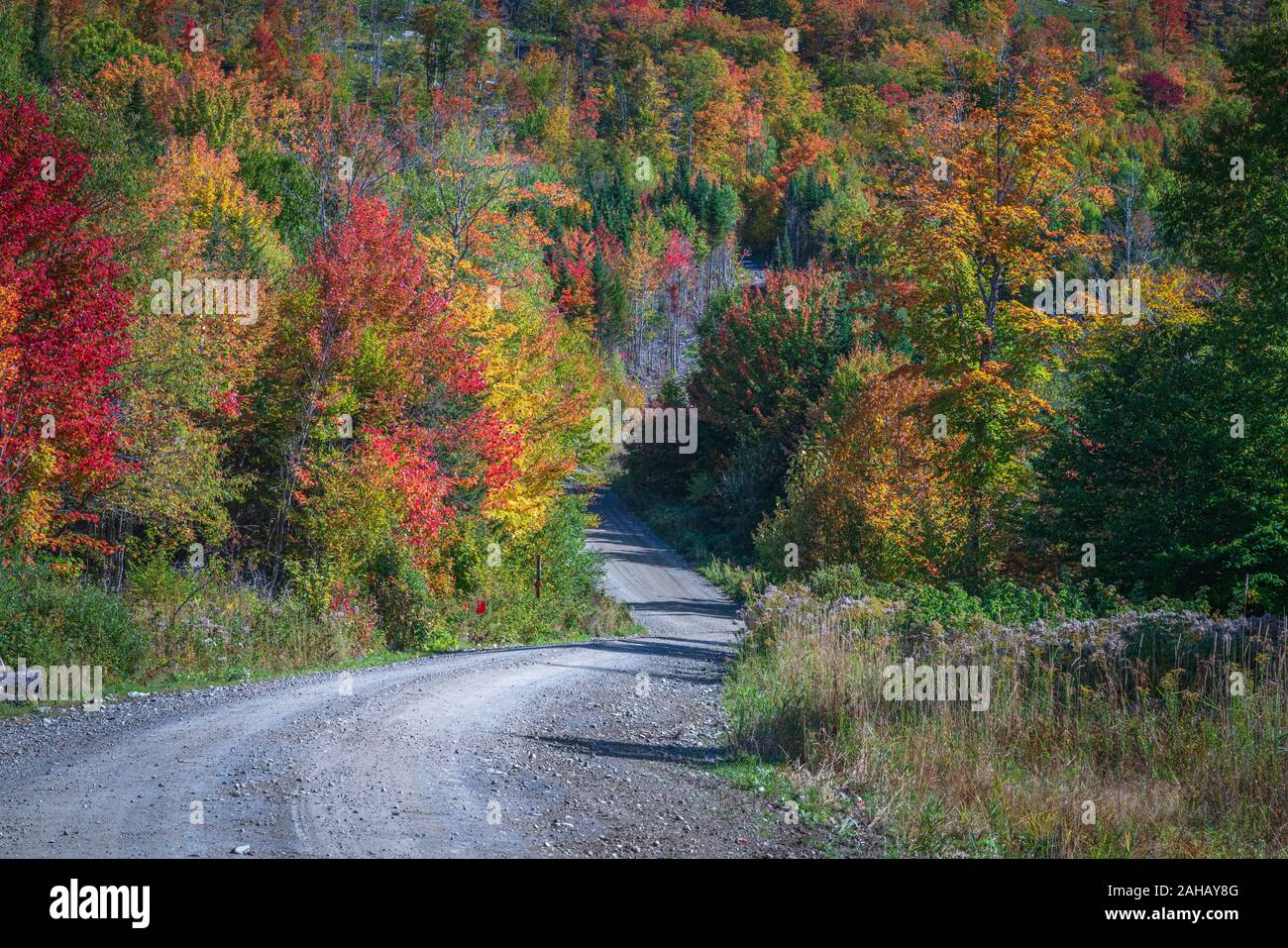 A curvy gravel road leds dow a hill into a colorful mountain forest. Stock Photo