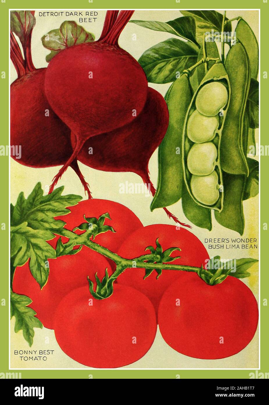 1920 S Vintage Food Advertising Page Poster Vegetable Seed Catalog Illustrations Including Beets Tomato Bush Lima Bean 1921 Henry A Dreer Usa Colour Lithograph Stock Photo Alamy