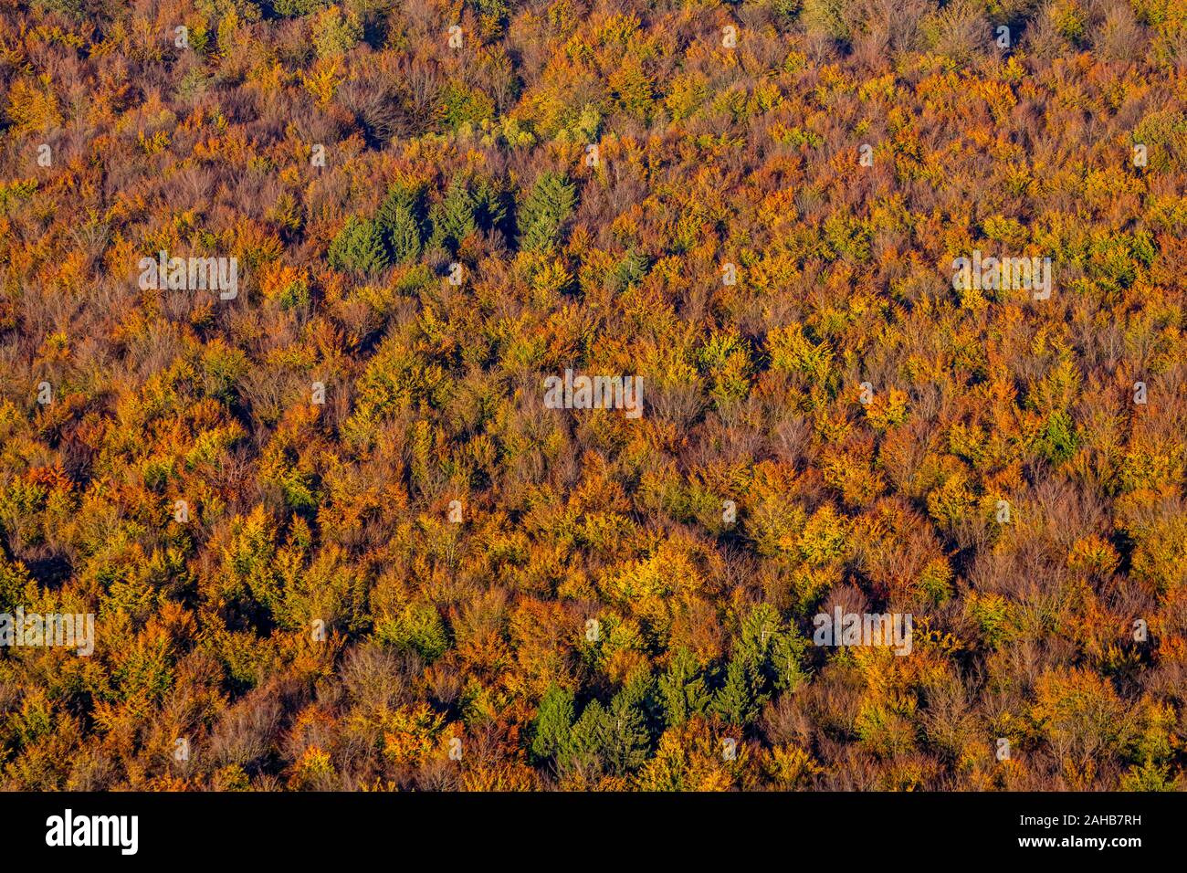 Aerial photo, autumnal coniferous forest, deciduous tree in autumn, forest, colourful mixed forest at Ackermanns Weg, Arnsberg, Sauerland, North Rhine Stock Photo