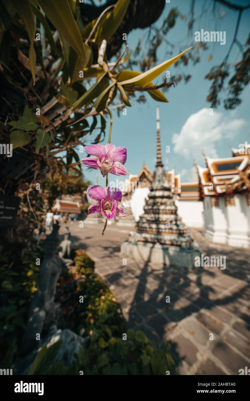 Thailand Bangkok Temple in Background with pink Orchids Stock Photo