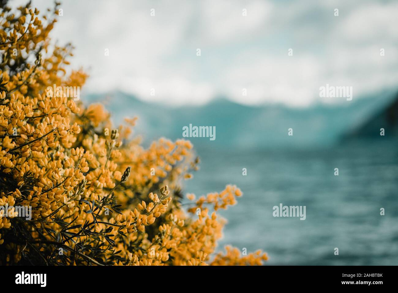 yellow flowers with blue lake in the background Stock Photo