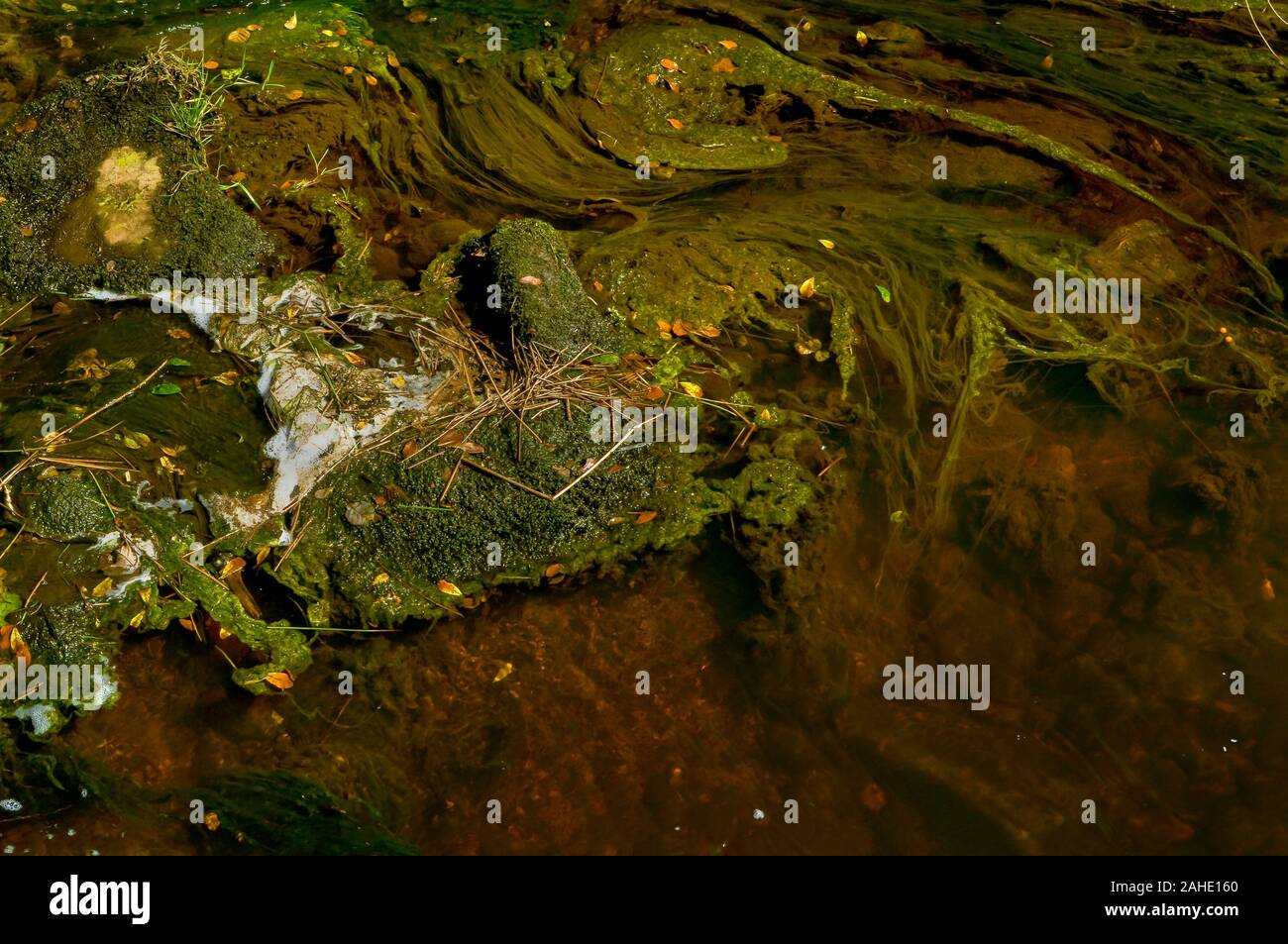 Swirling patterns of foam on the surface of a stream in bright sunshine with water weeds forming contrasting swirls beneath Stock Photo