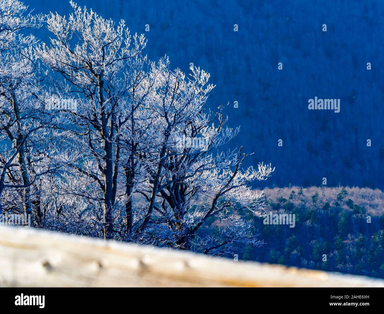 Early Winter snow on trees scenery Stock Photo