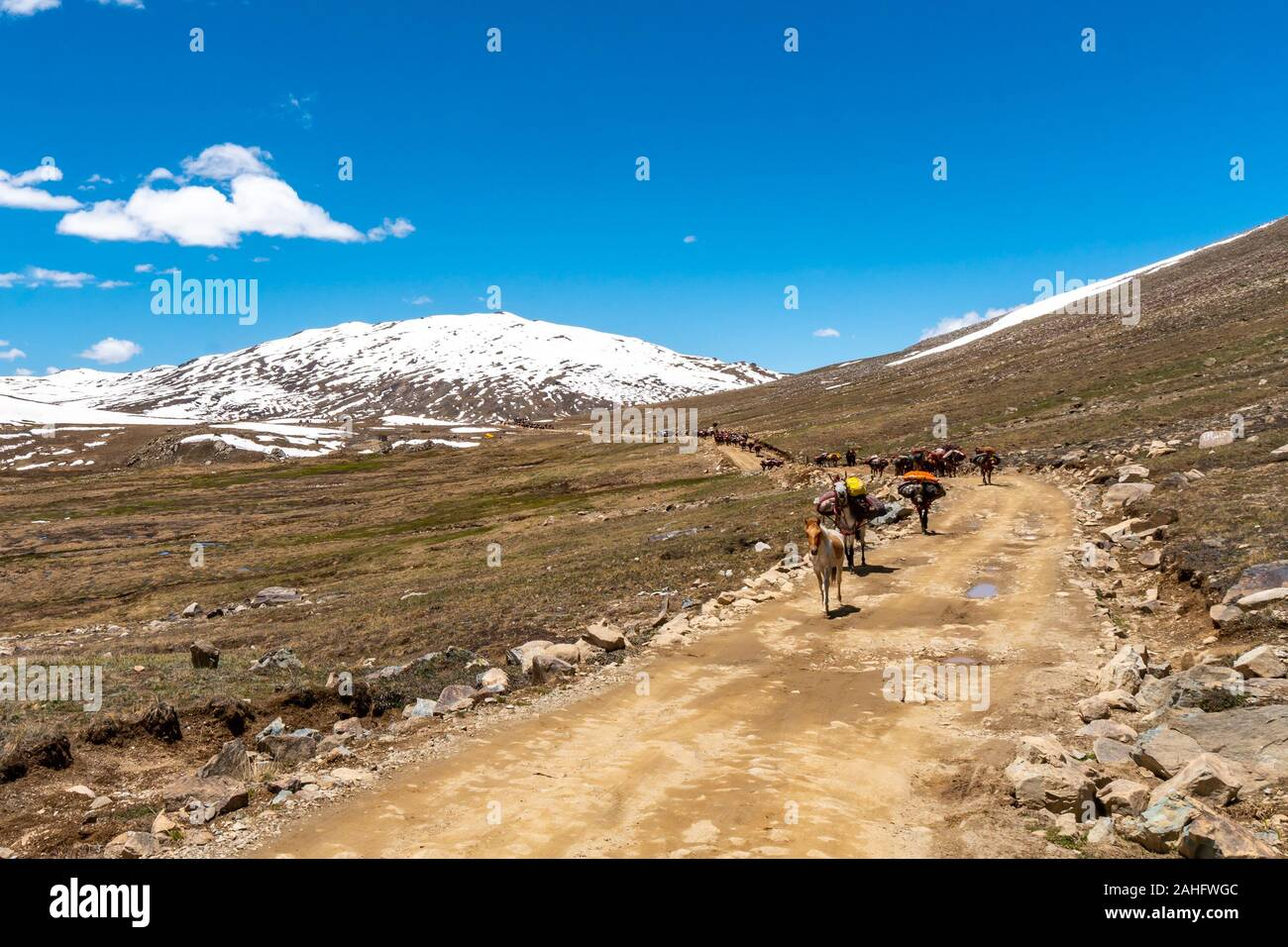 Deosai National Park Picturesque View of Nomads Walking with their Loaded Horses and Donkey to another Place on a Sunny Blue Sky Day Stock Photo