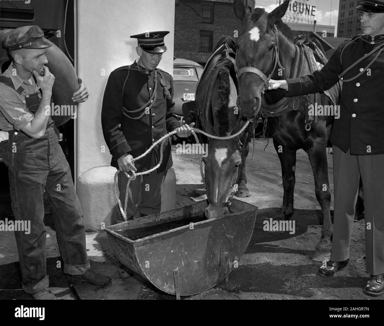 Horses drinking water Stock Photo