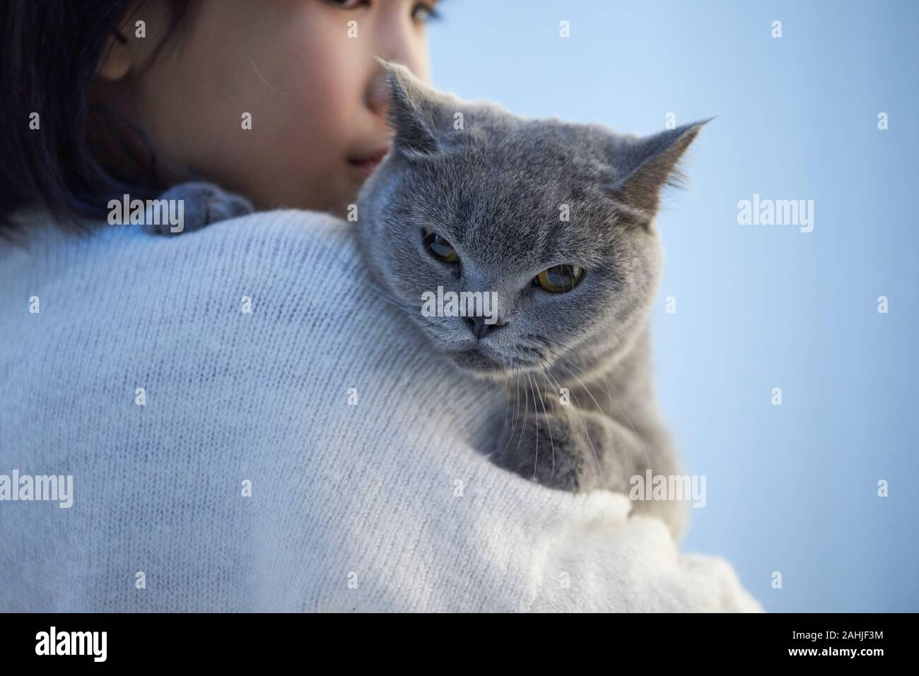 A Little Asian Girl Is Holding A Cute English Shorthair Cat Stock Photo Alamy