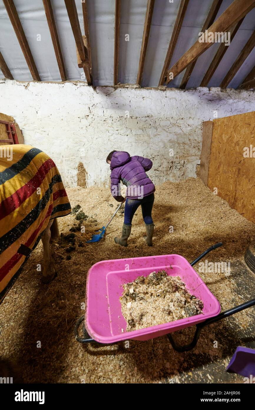 A young woman cleaning or mucking out a horse stable. Stock Photo