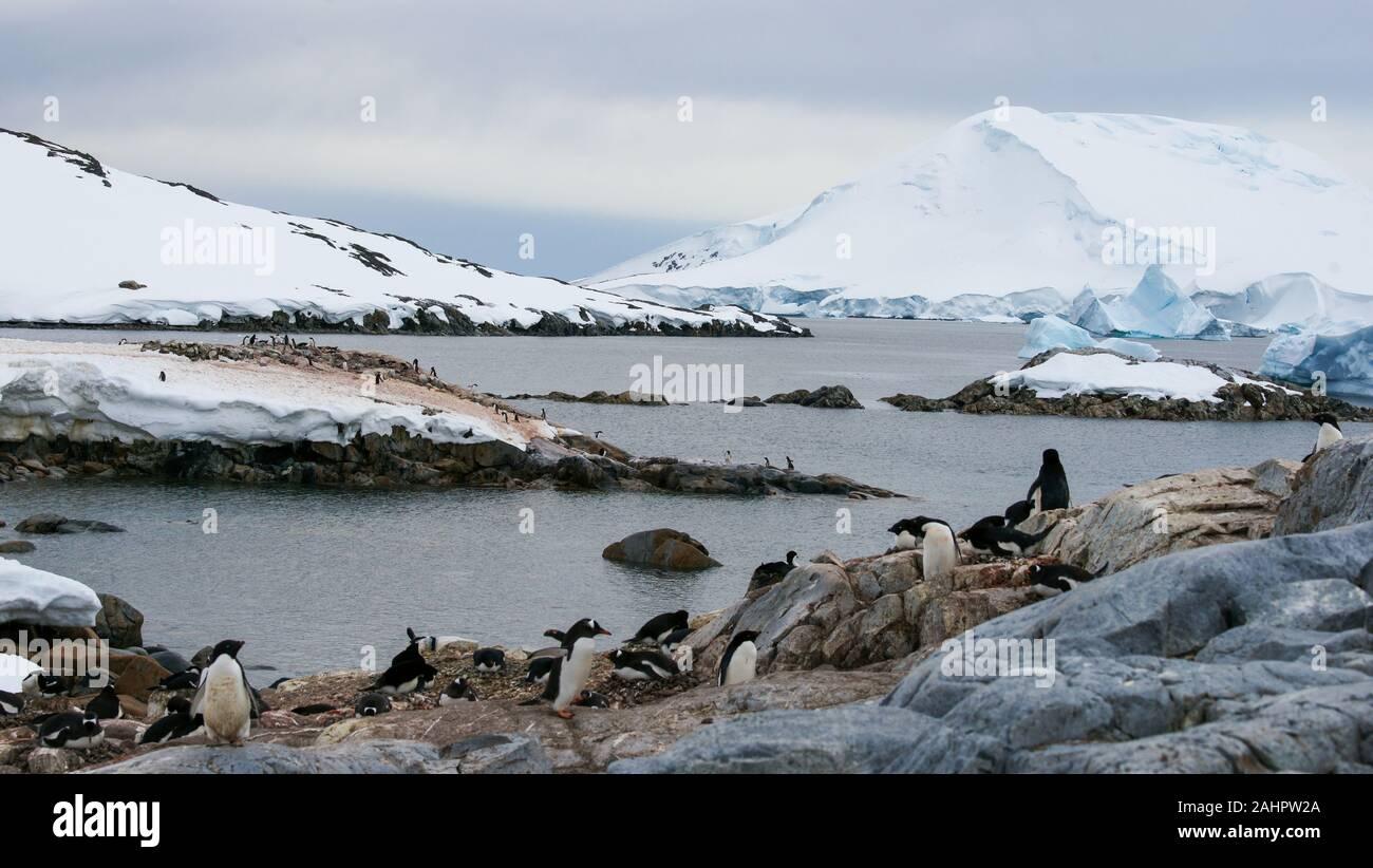 Petermann Island, Antarctica,  Gentoo and Adélie penguins nesting along the shore. Stock Photo