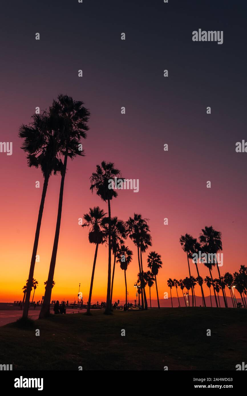 Palm trees at sunset, in Venice Beach, Los Angeles, California Stock Photo