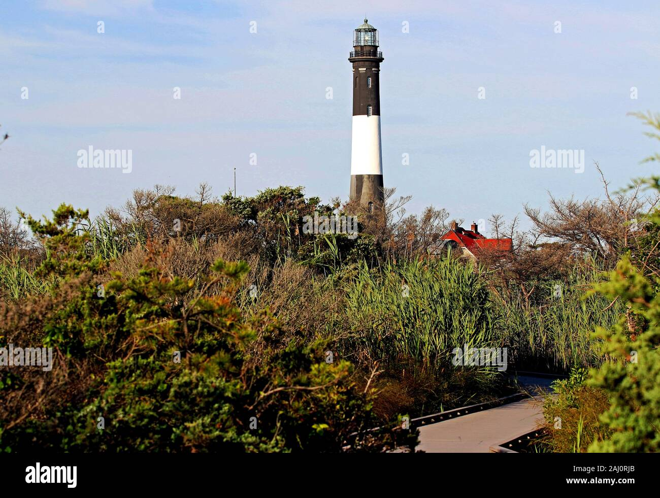 The fire island lighthouse peaking out from the brush Stock Photo