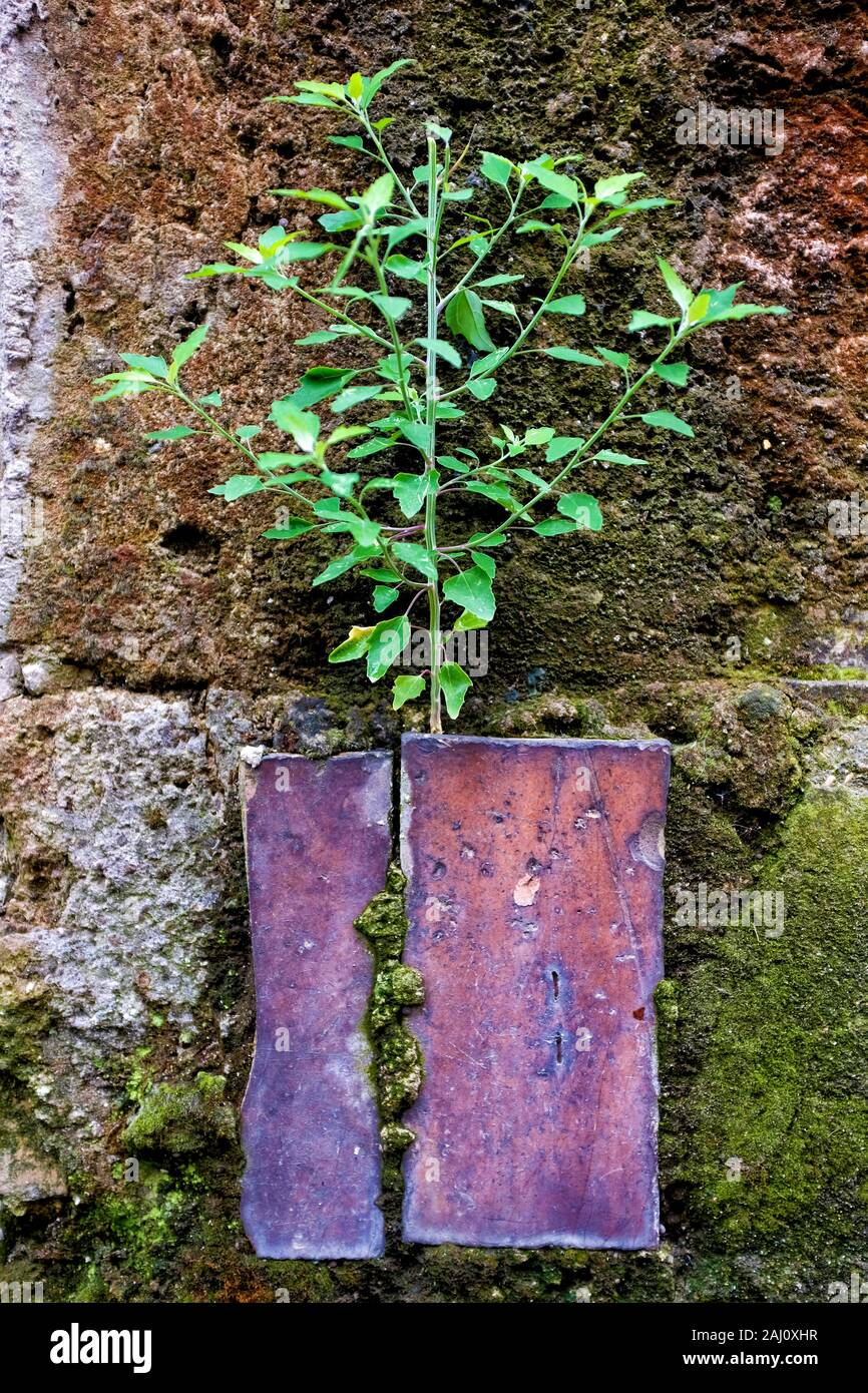Small Plant Growing On An Old Wall Stock Photo Alamy