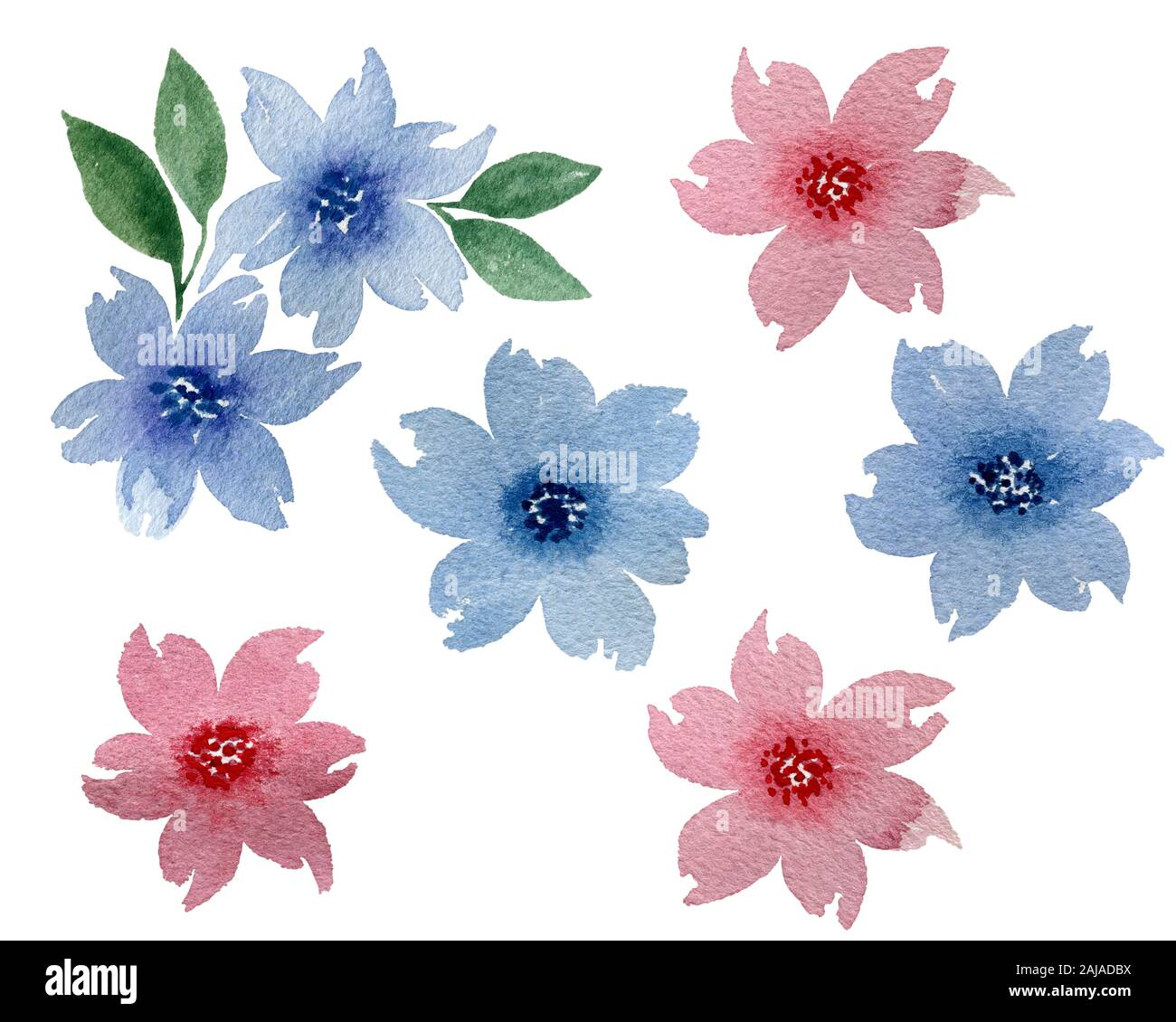 Floral Background Watercolor Floral Design Elements Isolated On