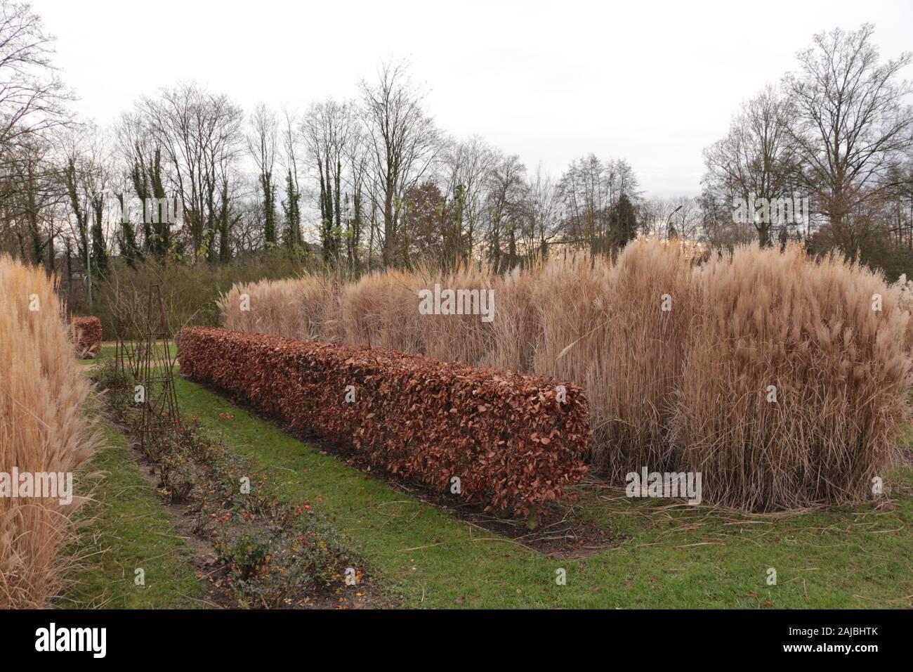 Blick Auf Den Klostergarten Von Kloster Kamp In Kamp Lintfort In