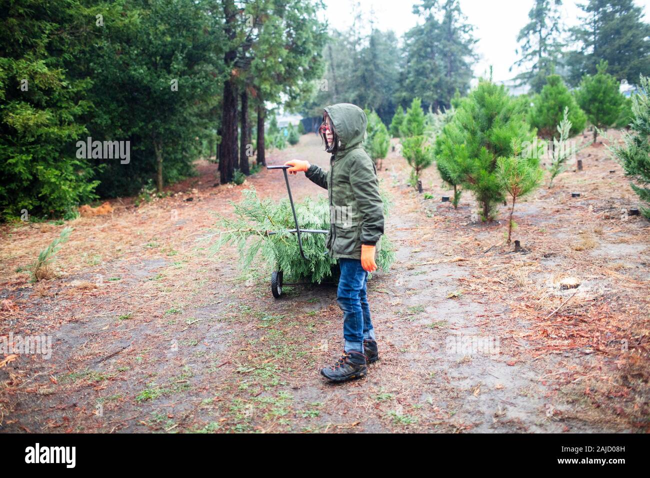 Child with glove carrying christmas tree Stock Photo