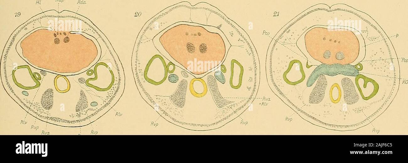 Chrome satin/é plaqu/é Num/éro de porte Figure 3 7,6/cm