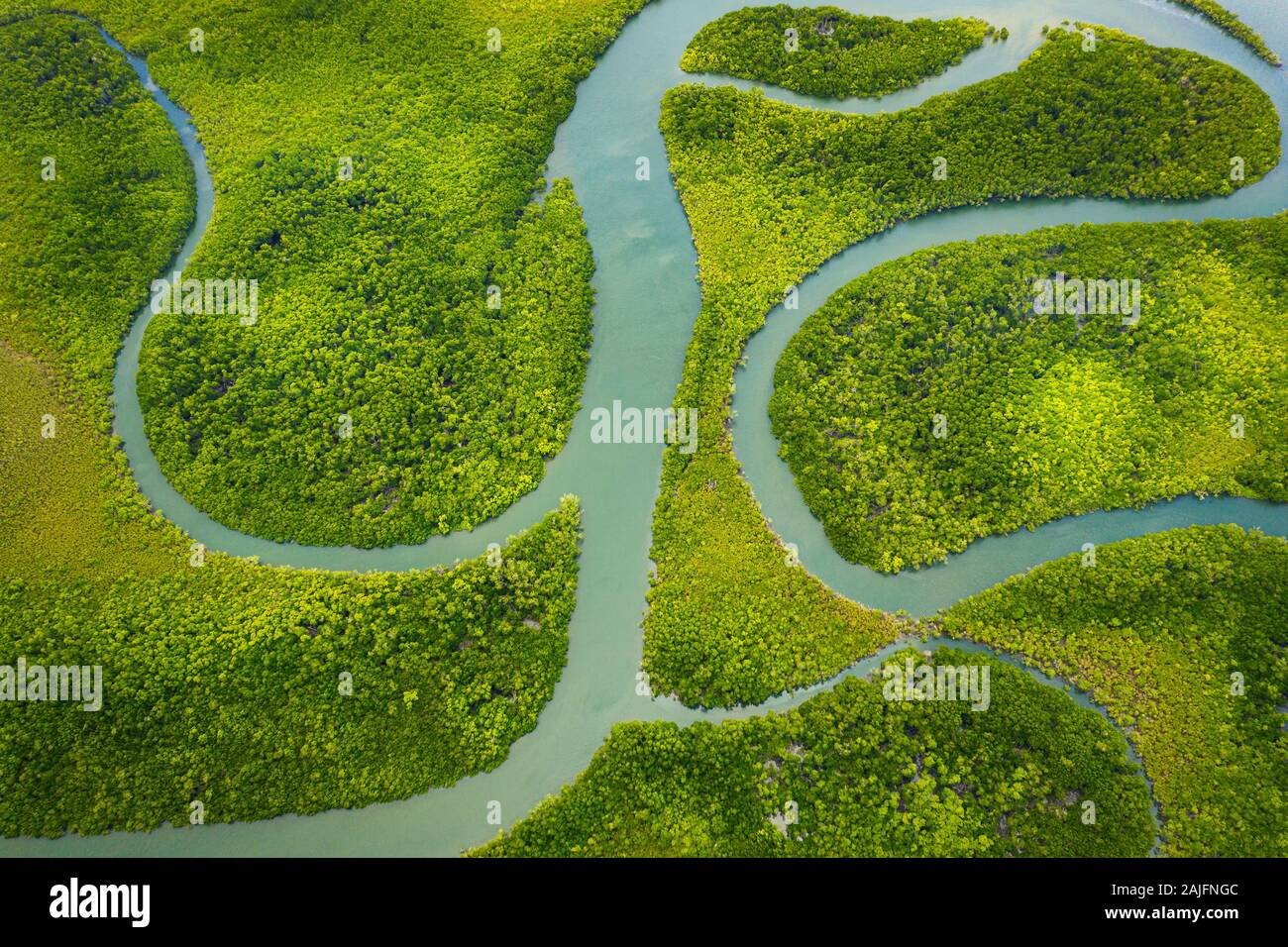 Aerial of the famous Hinchinbrook Channel and its mangroves. Stock Photo