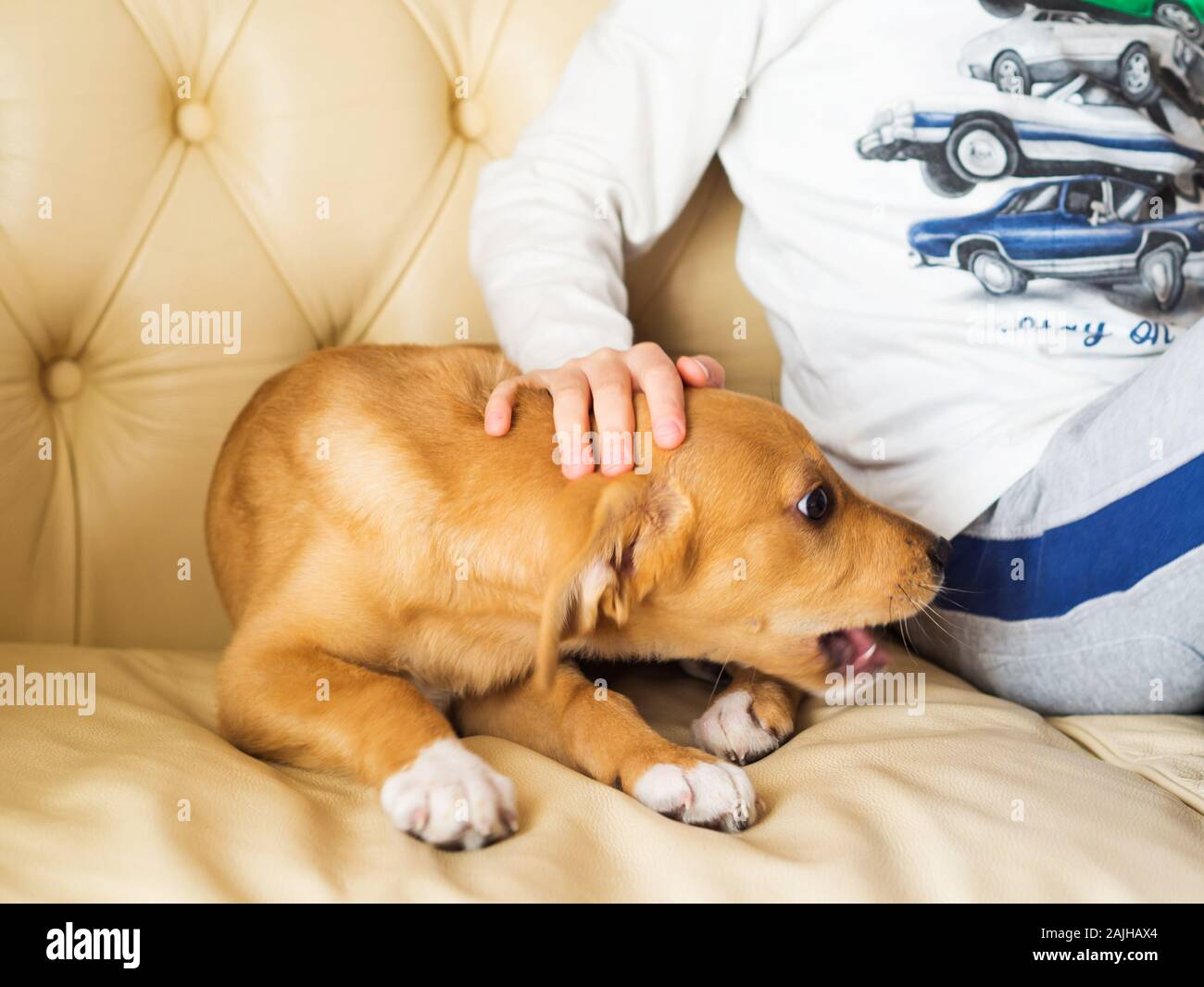 Little blonde boy playing with his puppy on couch Stock Photo