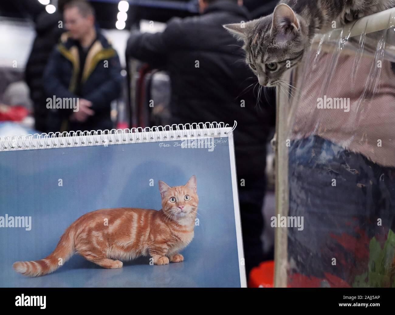 Клуб кошка москва вакансии в москве охранник клуб