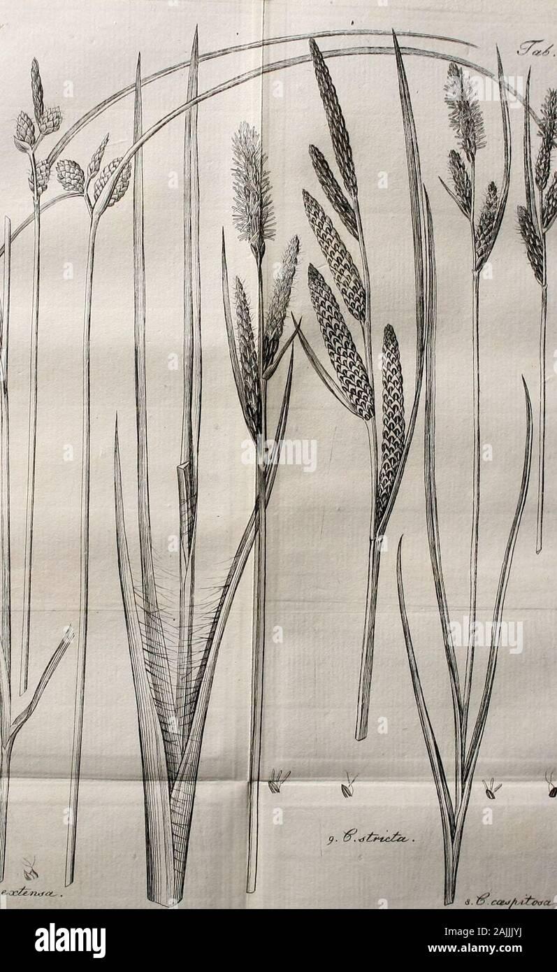 Archiv für die Botanik . 7.rff:. Stock Photo
