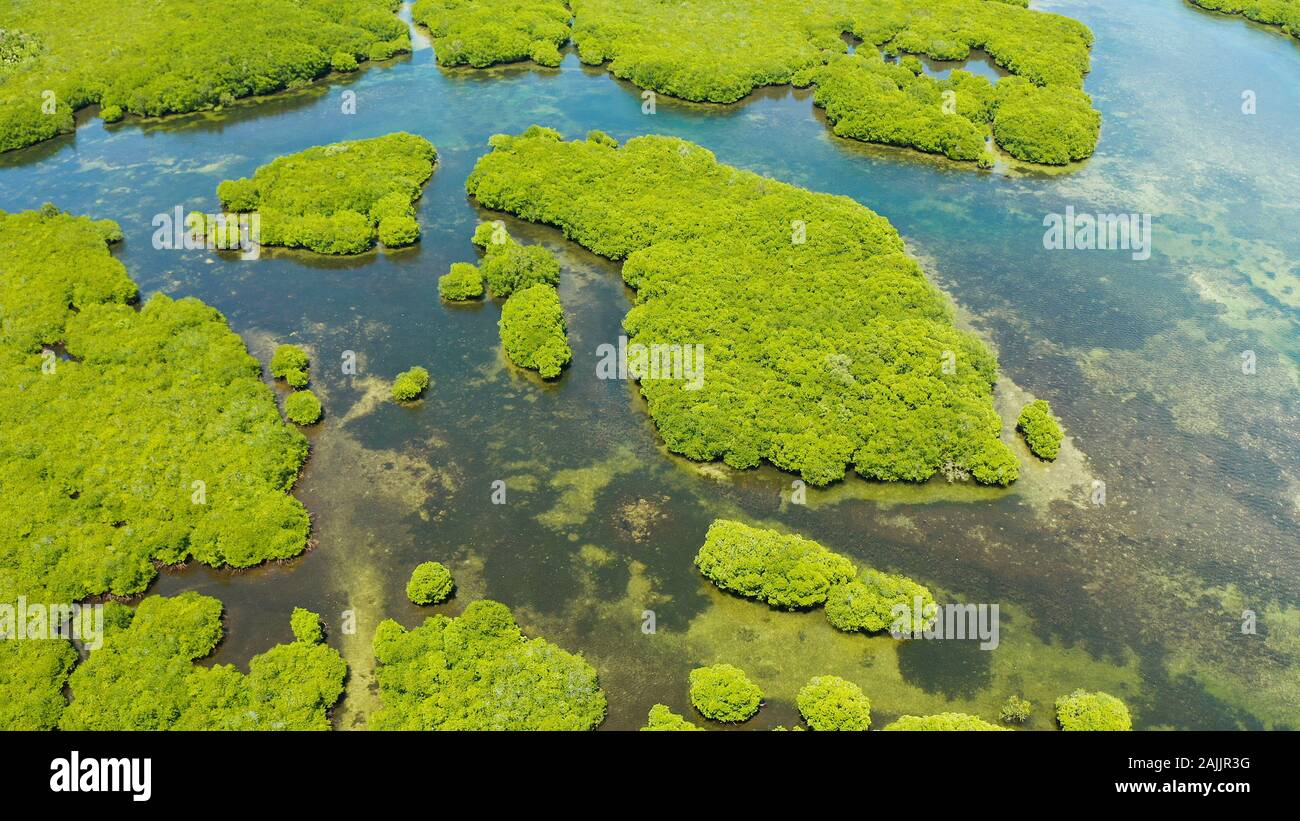 Tropical landscape with mangrove forest in wetland from above on Siargao island, Philippines. Stock Photo
