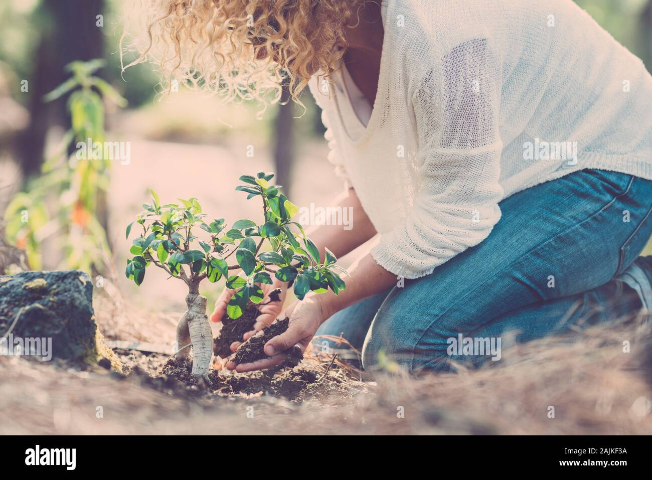 Environment and care for the planet and nature forest concept with lady seeding a new tree on the wood ground - save earth's day lifestyle people Stock Photo