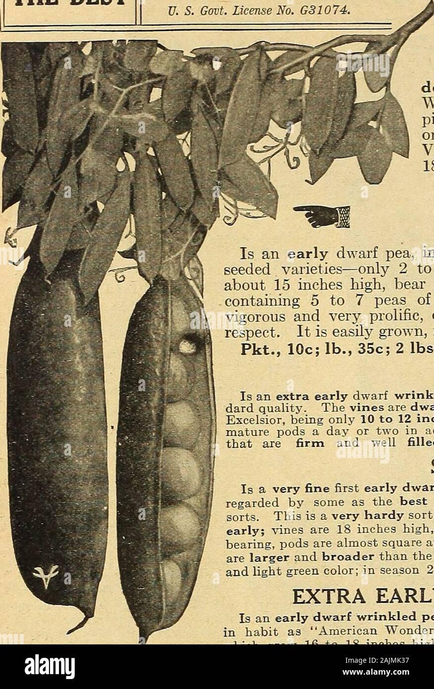 FINE PIE MAKER BABY BEAR PUMPKIN SEEDS* 20 FRUITS PER PLANT COMMON 6 INCH