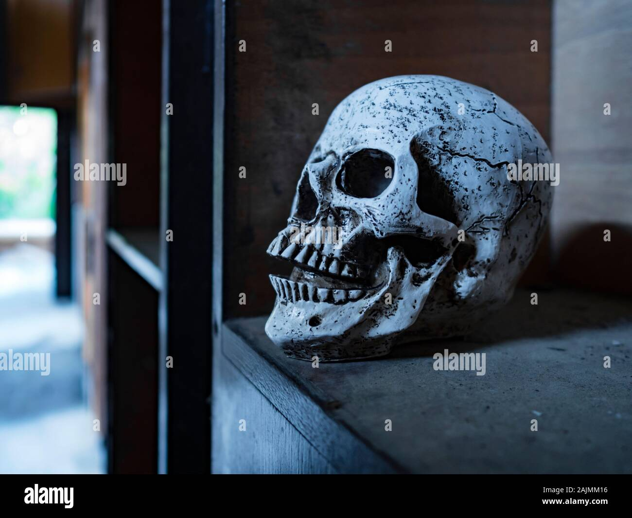 Skull isolated in closet close-up closeup Stock Photo