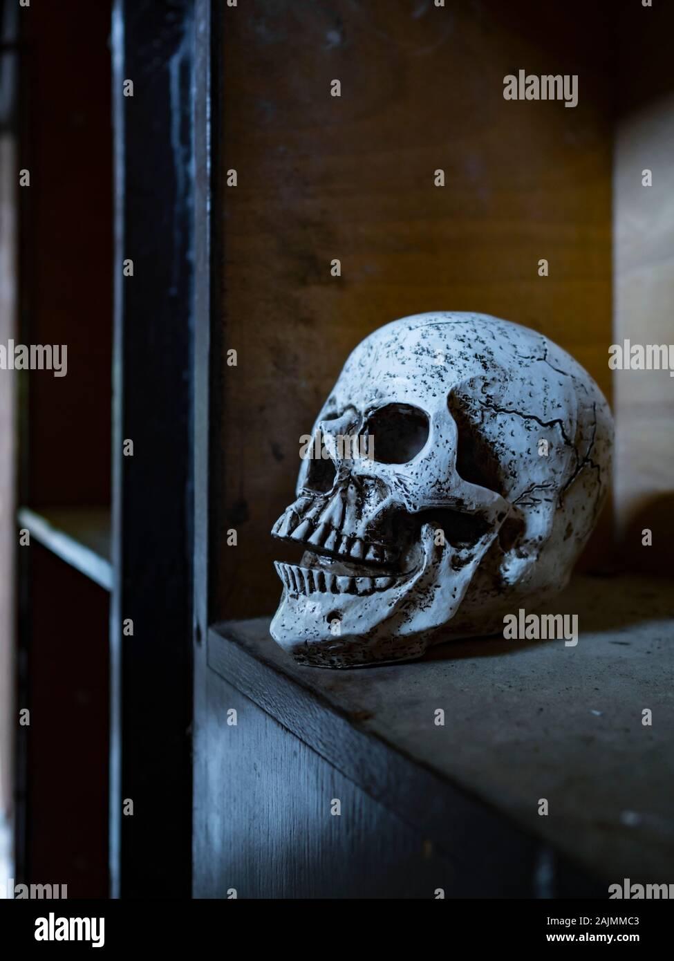 Skull isolated in closet close-up closeup Stock Photo