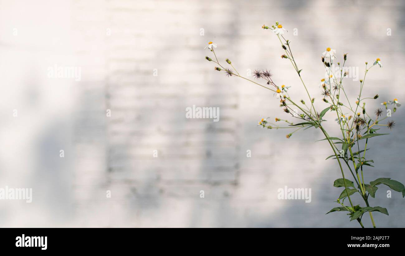 Little White Flower Decoration On Modern White Brick Wall Texture Background For Wallpaper And Graphic Web Design Vintage Shabby Chic Style Stock Photo Alamy