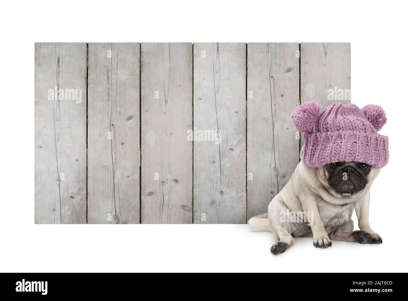 cute pug puppy dog with pink knitted winter hat, sitting in front of blank wooden fence promotional board sign of barn wood, isolated on white backgro Stock Photo