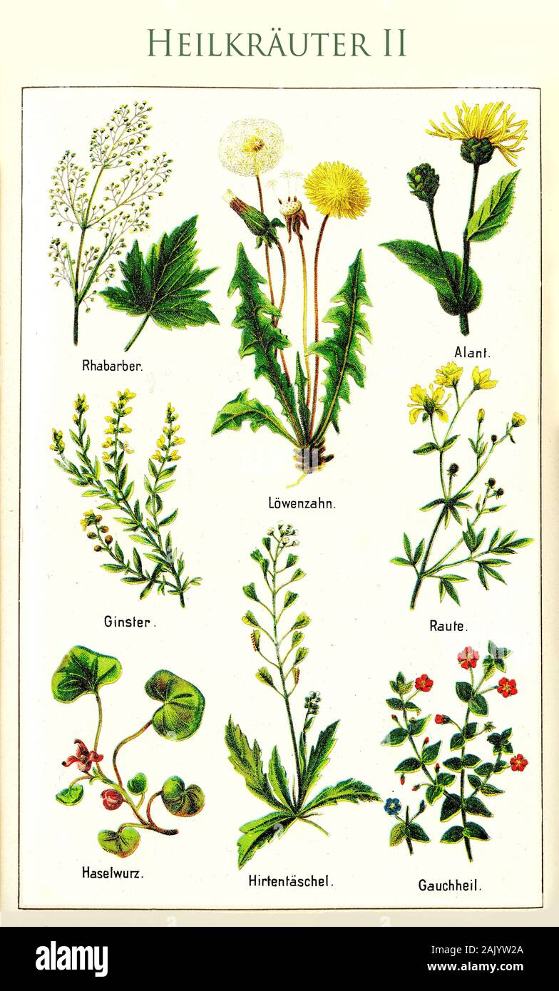 Healthcare Color Illustration Of The Principal Medicinal Herbs With Their German Names Cultivated For Herbal Medicine Since Centuries Stock Photo Alamy