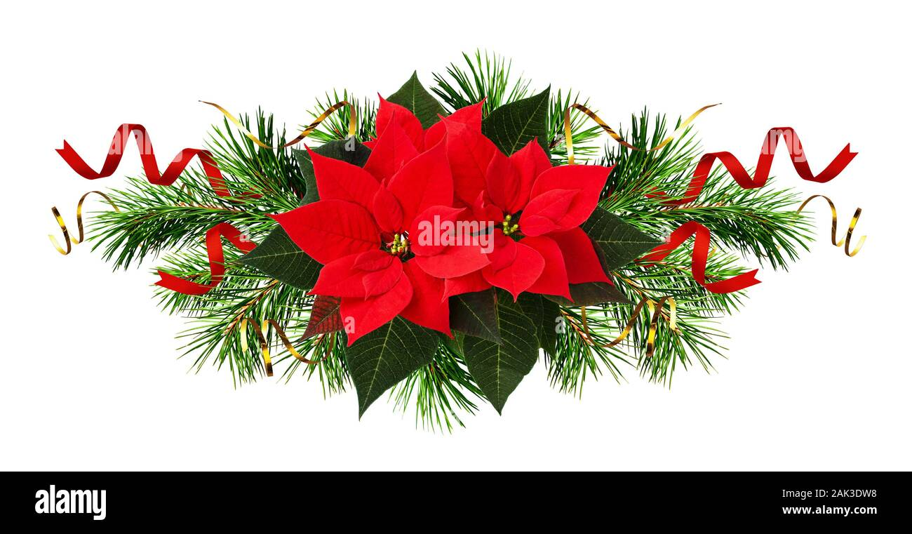 Red Poinsettia Flowers And Christmas Decorations Isolated On White Stock Photo Alamy