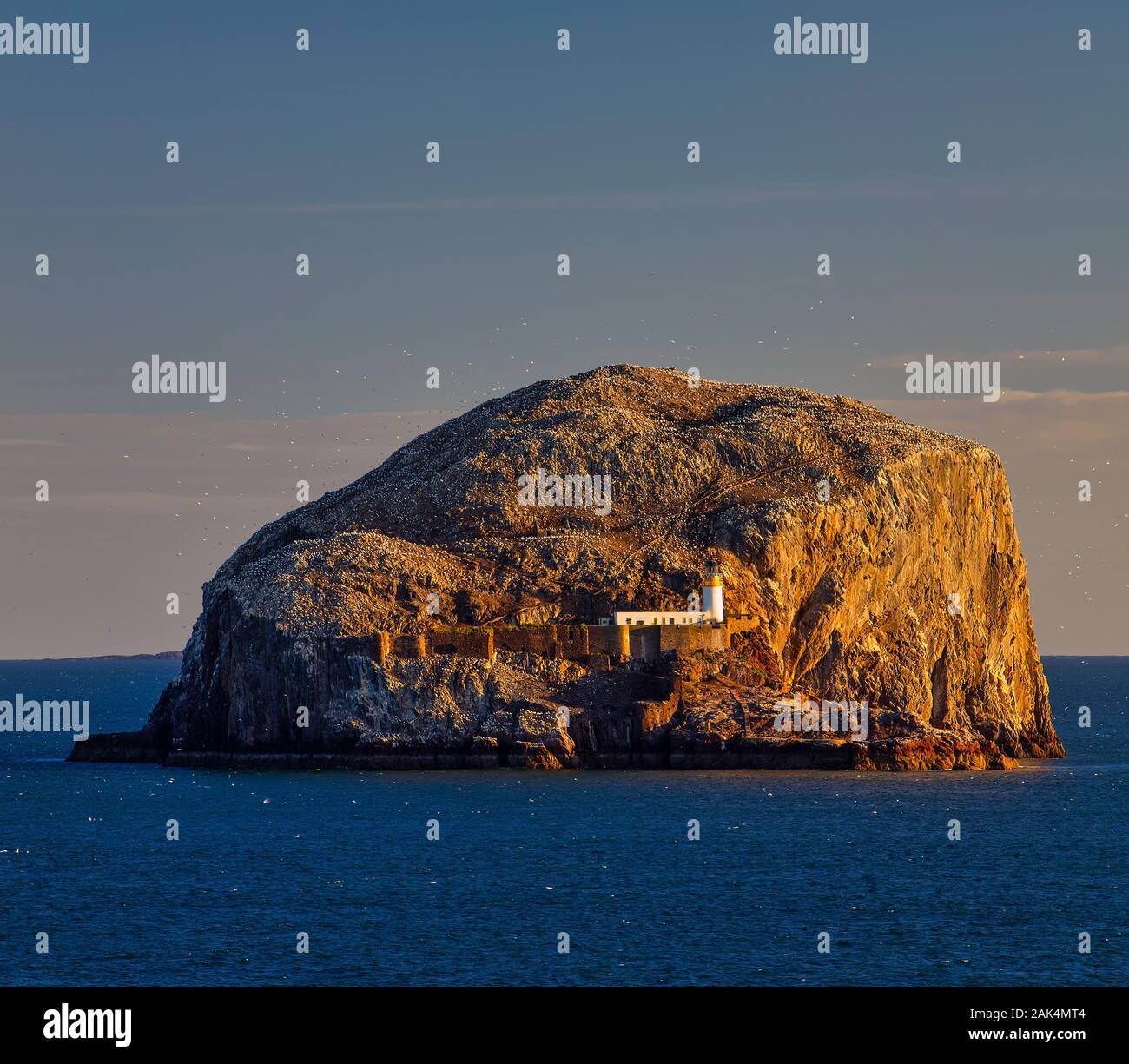 A summer time view of Bass Rock at dawn from North Berwick, East Lothian, Scotland, United Kingdom Stock Photo