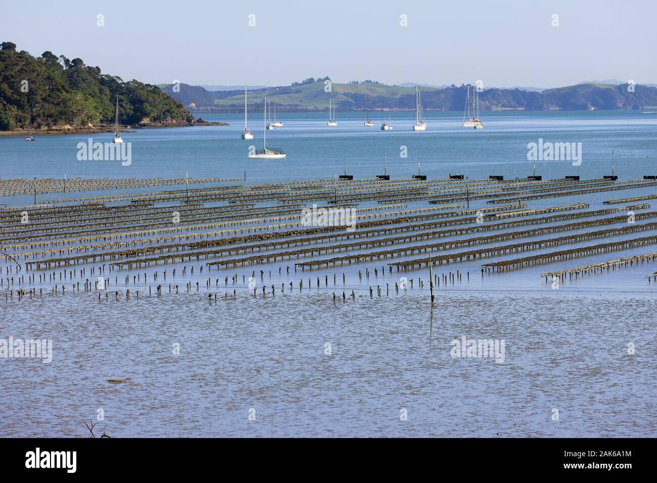 Nordinsel/Northland: Russel, Austernbank in der Bay of Islands, Neuseeland | usage worldwide Stock Photo
