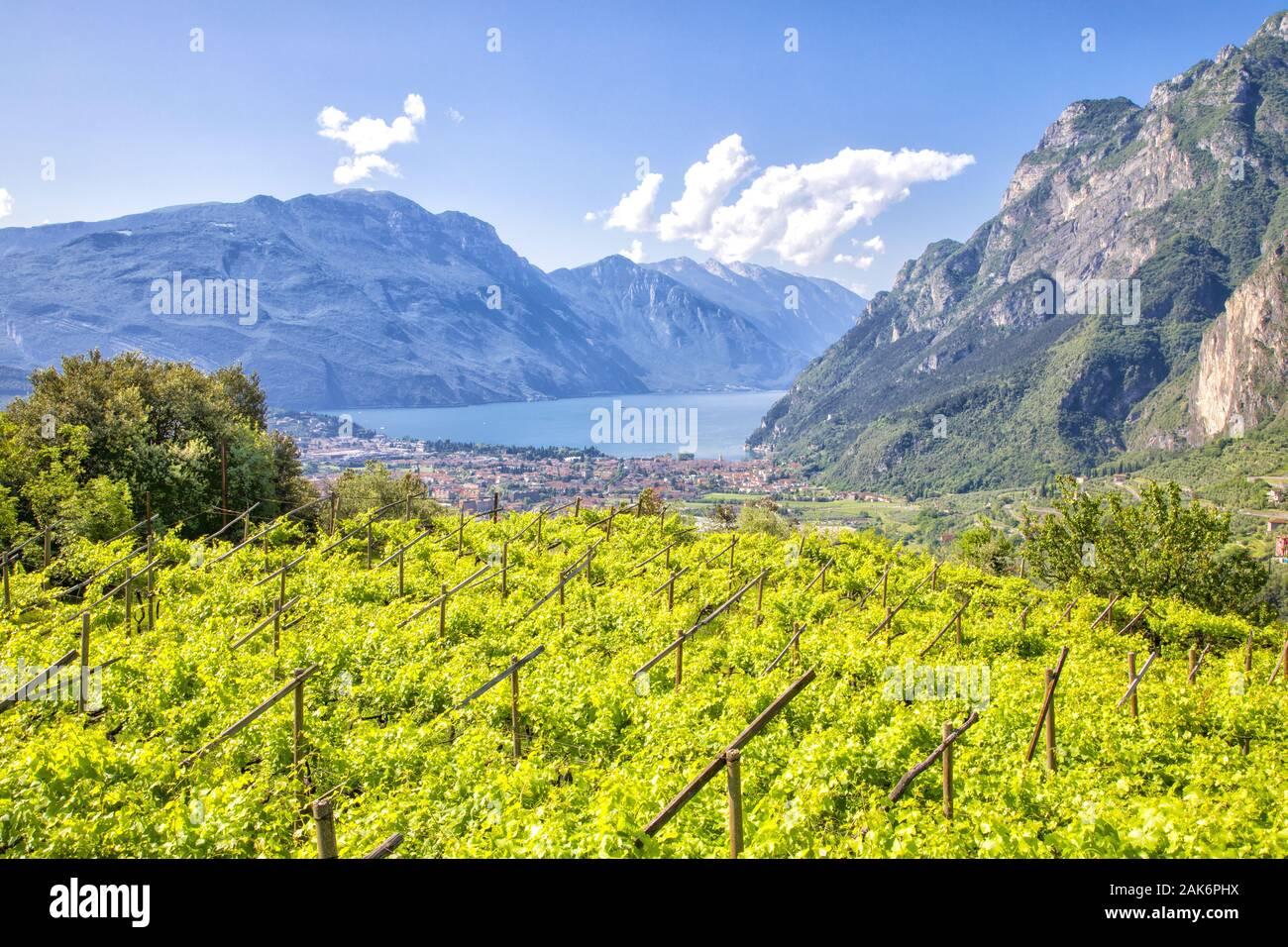 Trient/Riva del Garda: Riva, Blick von den Weingaerten oberhalb der Stadt auf Gardasee und Monte Baldo, Gardasee   usage worldwide Stock Photo