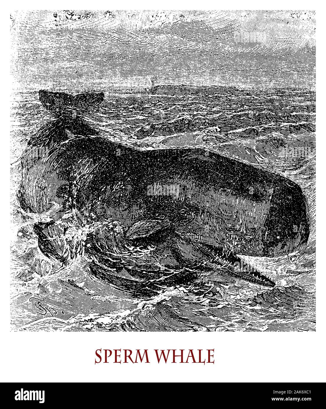 Sperm Whale Oil Spermaceti Oil High Resolution Stock Photography And Images Alamy