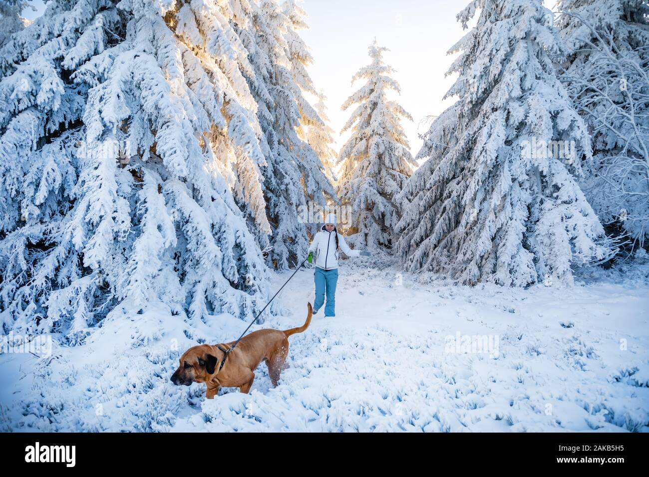Young woman walking with dog between white trees covered in fresh snow on sunny winter day in mountain Stock Photo